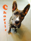 Charlie (mix)